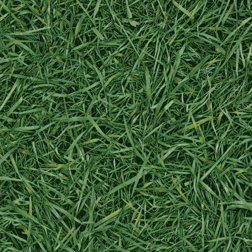IVC Bingo Grass 025 фото
